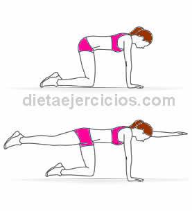 rutina de ejercicios abdominales perros y aves